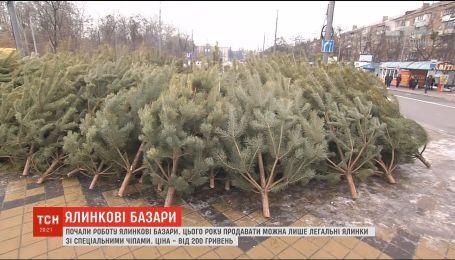 В Украине заработали первые елочные базары