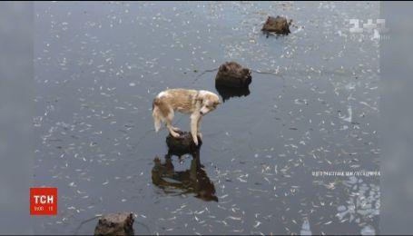На Волыни спасатели вытащили бездомного пса из центра растаявшей реки