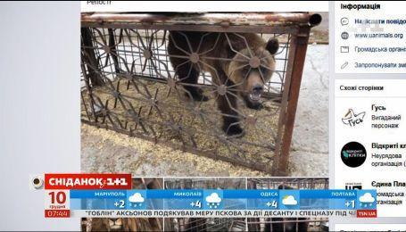 Защищает ли в Украине закон животных