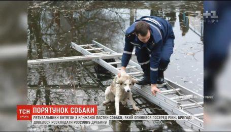 На Волыни бездомный пес застрял посреди замерзшей реки Припять