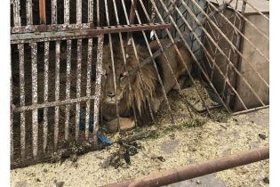 Мінекології перевірить скандальний звіринець у Покровську