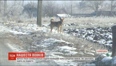 Жители трех поселков боятся ходить по улицам из-за бродячих волков