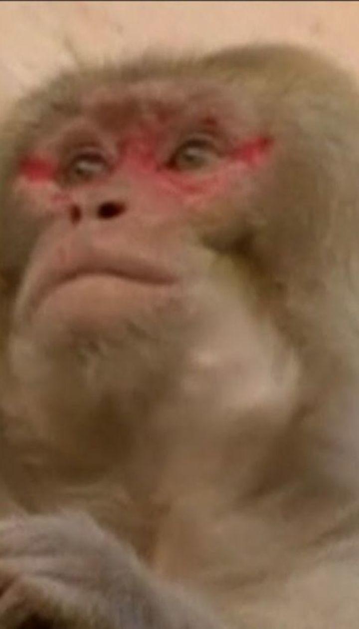 В Нью-Дели работникам правительственных зданий досаждают обезьяны