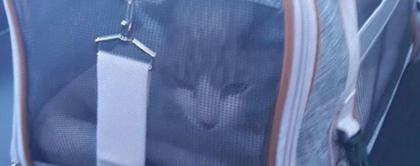 """В аэропорту """"Борисполь"""" кошка на контроле сбежала от хозяев - животное освобождали всю ночь"""