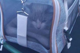 """У аеропорту """"Бориспіль"""" кішка на контролі втекла від господарів - тварину визволяли всю ніч"""
