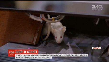 В Колумбии депутаты забросали коллег крысами