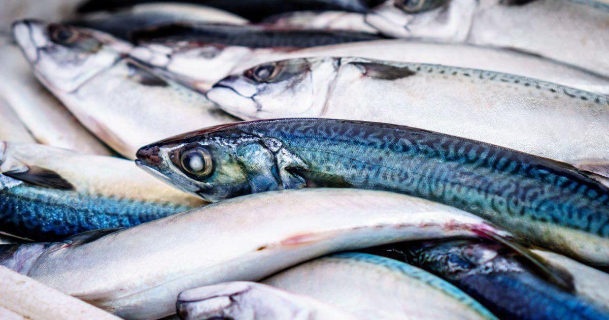 Оселедець та лосось: українці стали більше виробляти консервованої риби