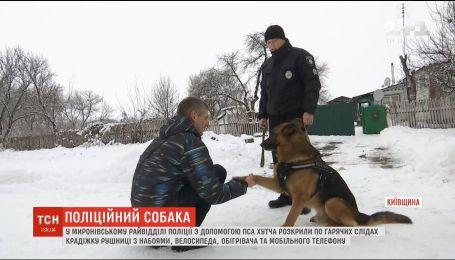 Полицейский пес одновременно раскрыл три кражи по горячим следам