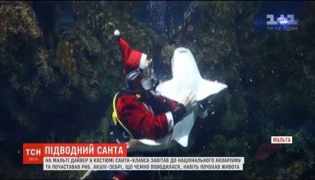 На Мальте Санта-Клаус посетил национальный аквариум, чтобы поздравить рыб