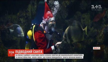 Санта-Клаус поздравил рыб, обитающих в национальном аквариуме на Мальте