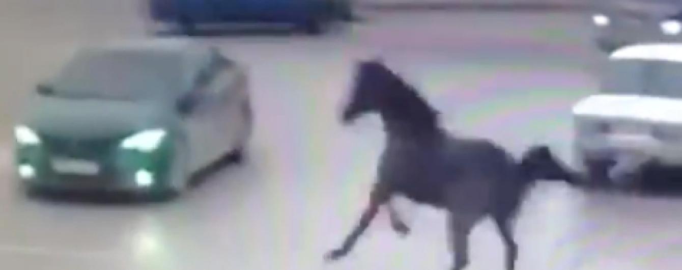 В Чечне напуганная лошадь влетела на всех порах в Toyota. Видео