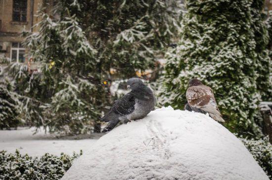 Половину України засипатиме снігом, а на іншій буде сонячно. Прогноз погоди на 13 січня