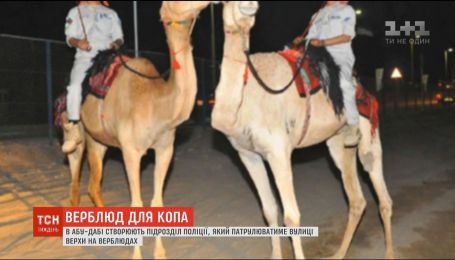 В Абу-Даби создают подразделение полиции на верблюдах