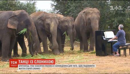 В Индии работает лагерь для омоложения слонов пожилого возраста
