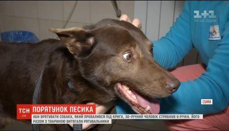 У Сумах чоловік врятував собаку, який провалився під кригу