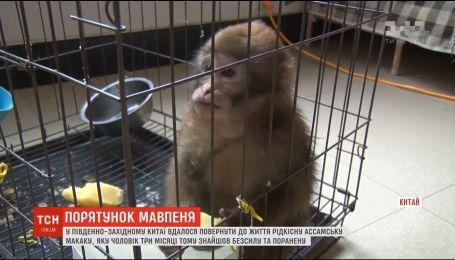 Рідкісну ассамську макаку врятували у Китаї