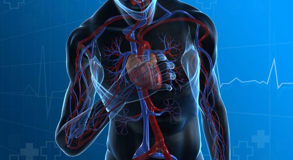 Где искать селезенку? Интерактивный спецпроект ТСН.ua на знание человеческого тела