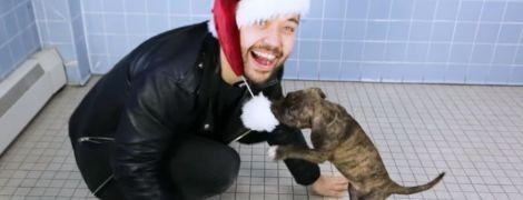 Очень откровенное декольте Деми Роуз и видео с собачками, которых удивляют фокусами. Тренды Сети