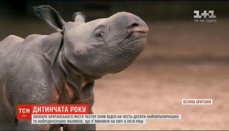 Честерський зоопарк склав перелік найпопулярніших малюків, що з'явилися на світ цього року