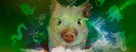 Новый 2019 год: что Желтая свинья нам готовит