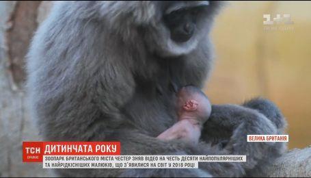 ТОП-10 народжених цьогорічних звірят склав британський зоопарк