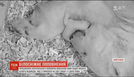 У Берліні показали нове відео малечі білого ведмедя