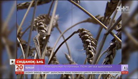 Україна зібрала рекордні 70 мільйонів тонн зерна – економічні новини