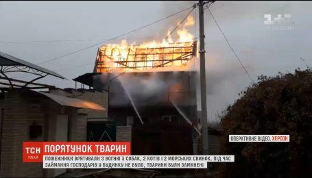 Живые и невредимые: в Херсоне пожарные спасли животных из горящего дома