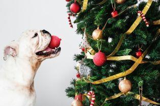 ТСН Stories. Как украсить елку и дом к праздникам в 2019