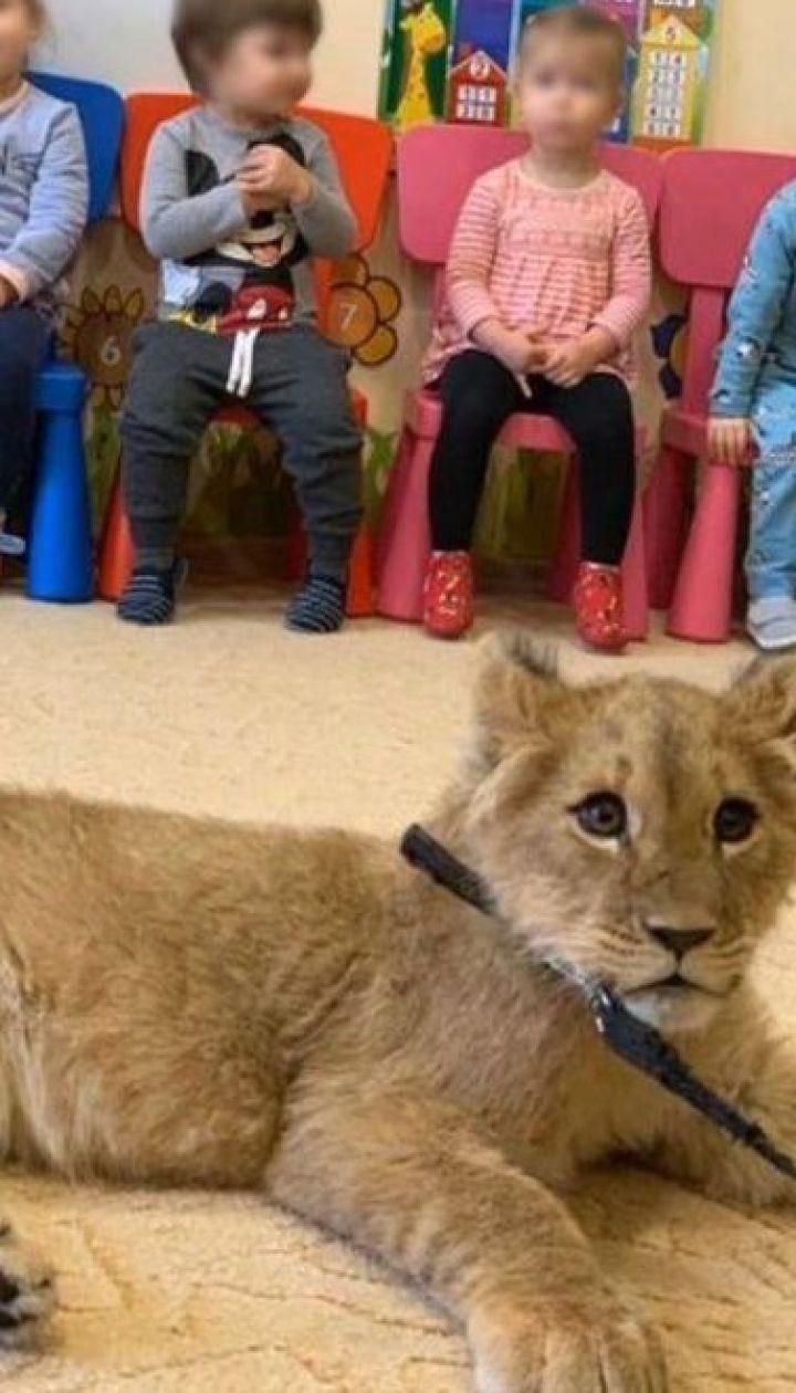 Фото с львенком: в Белой Церкви в детсады привели маленького хищника