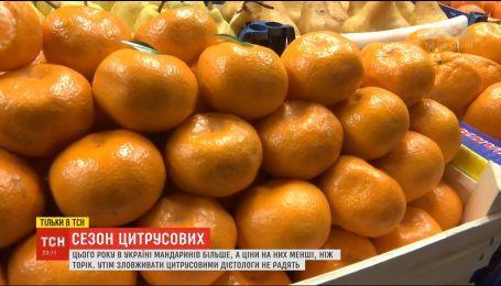 Цитрусовая лихорадка: ТСН узнала, полезны ли мандарины и как вырастить их у себя в комнате
