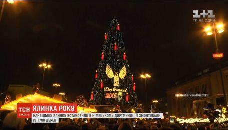 Елка года: в Германии установили самую большую рождественскую елку в мире