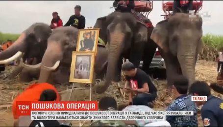 У Таїланді слони-пошуковики намагаються знайти зниклого дворічного хлопчика