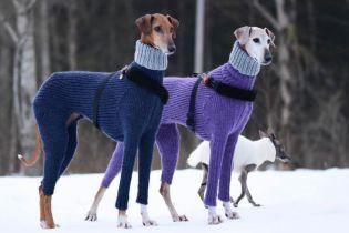 Шутки о элегантных стройных собаках в свитерах и девушка с голосом Siri. Тренды Сети