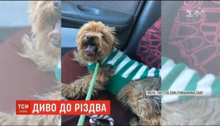 В Аризоне случайно нашли собаку, потерявшуюся четыре года назад