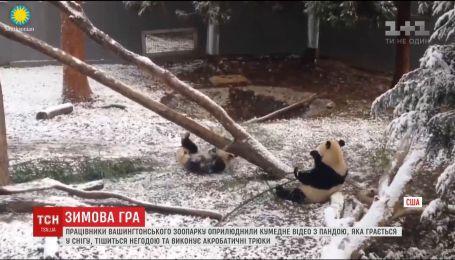 Работники Вашингтонского зоопарка показали, как панда радуется снегу