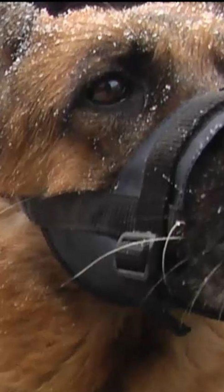 Українські собаки-поліцейські отримали новенькі авто