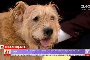 Як обездолений собака перетворився на загального улюбленця