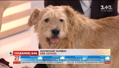 """Співведучий """"Сніданку"""" – пес Бенедикт шукає турботливих господарів"""