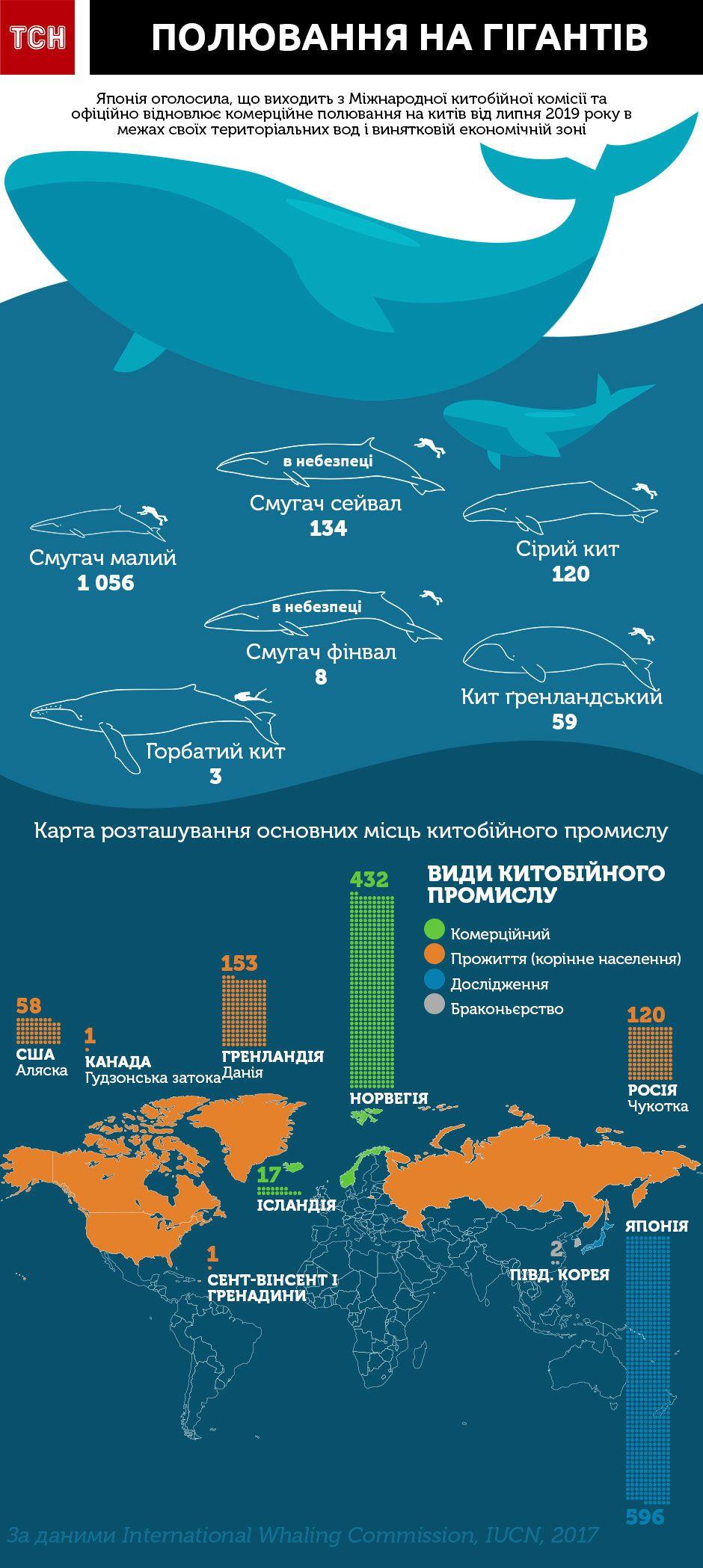 полювання на китів, китобої, інфографіка