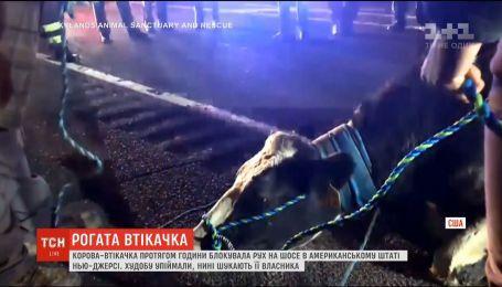 Корова в течение часа блокировала движение на американском шоссе
