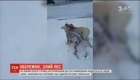Пес-агресор: у столиці розфарбований аргентинський дог нападає на інших собак