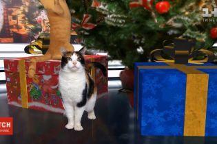 Коты против елок. Как обезопасить праздничное дерево и домашнее животное друг от друга