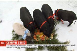 """Застолье на елке и нарядные мини-свинки. Обитатели зоопарка под Киевом отгуляли """"корпоратив"""""""