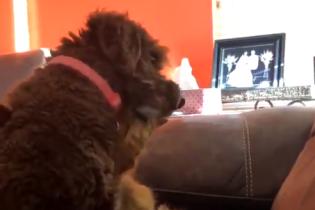 """""""Неужели мой кот только что обнял пса?"""". Сеть всколыхнуло трогательное видео, в котором четвероногие демонстрируют свою любовь"""