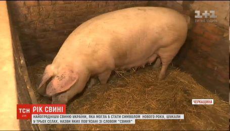 Год Свиньи: ТСН разыскала самый большой символ года в селах, названных в его честь