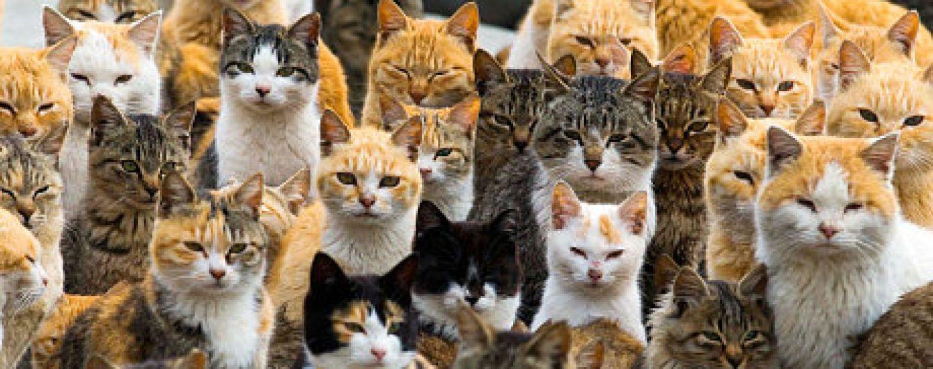 В РФ решили урегулировать количество животных в квартирах