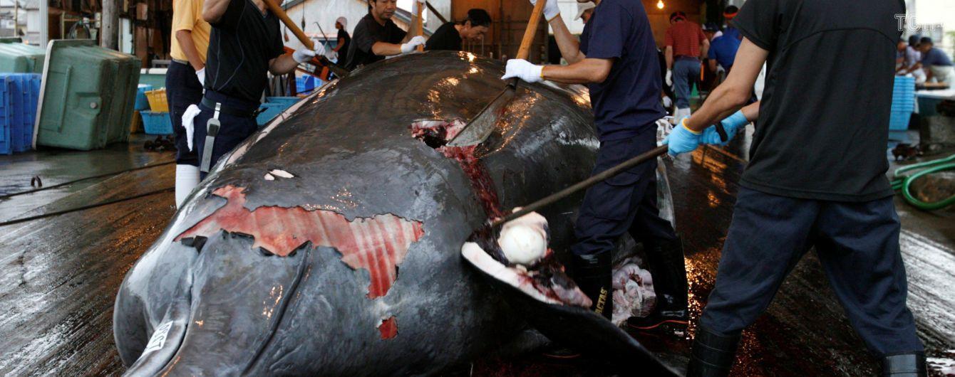 Японія офіційно відновить полювання на китів, яке заборонено у всьому світі вже понад 30 років