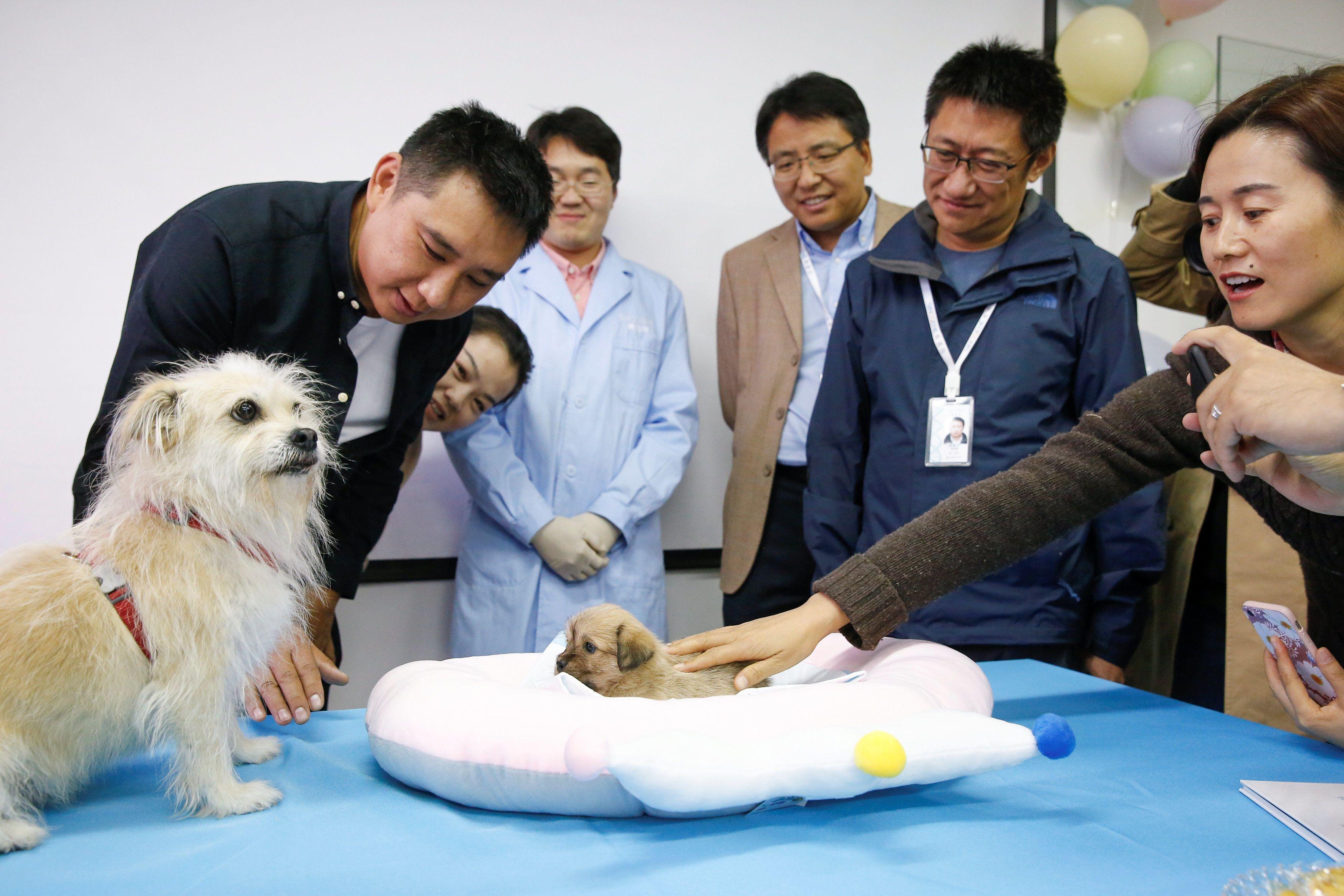 Клонування домашніх тварин у Китаї_7
