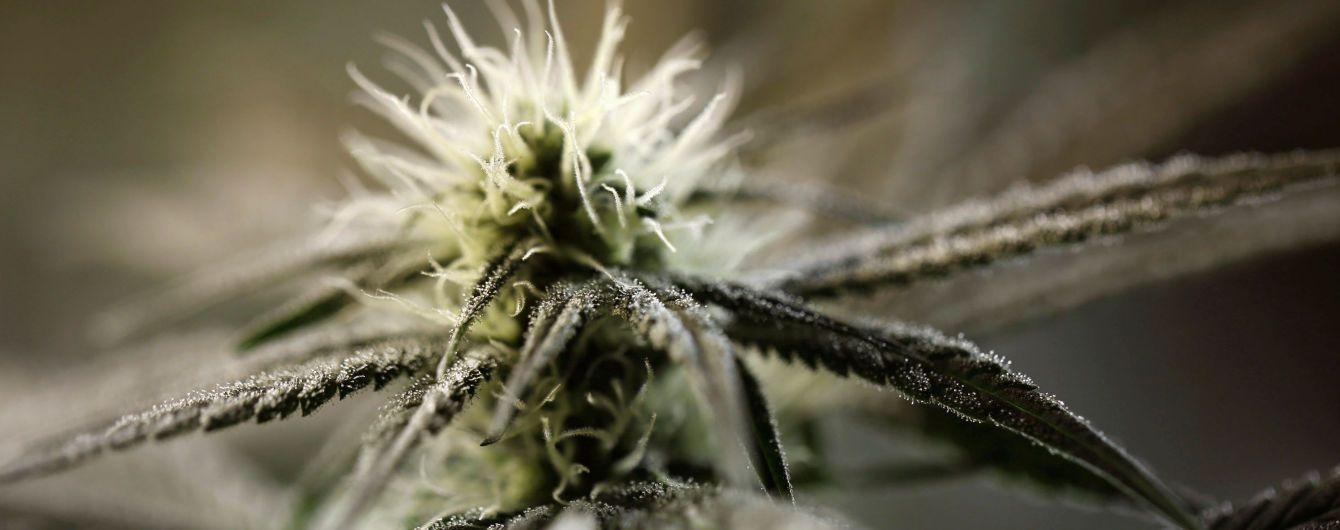 Таиланд первым в Азии легализовал медицинское использование марихуаны